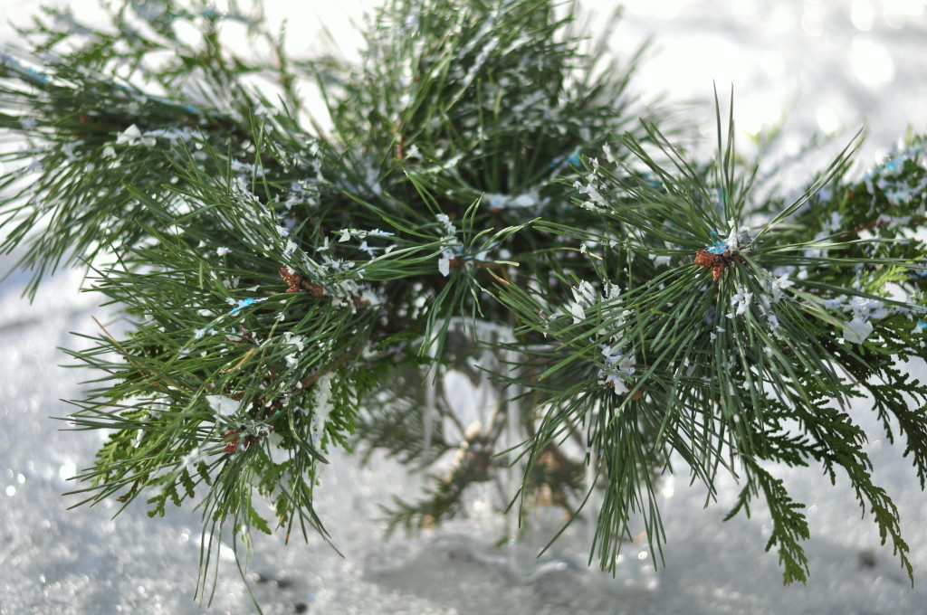 winter branches, ice, pine branches, christmas decor