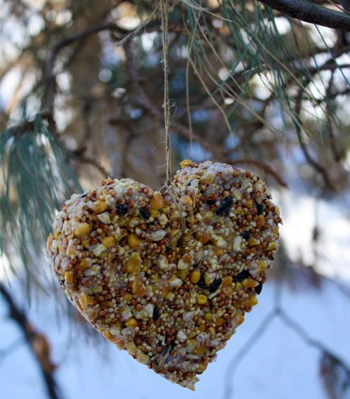 DIY, bird feeder, heart