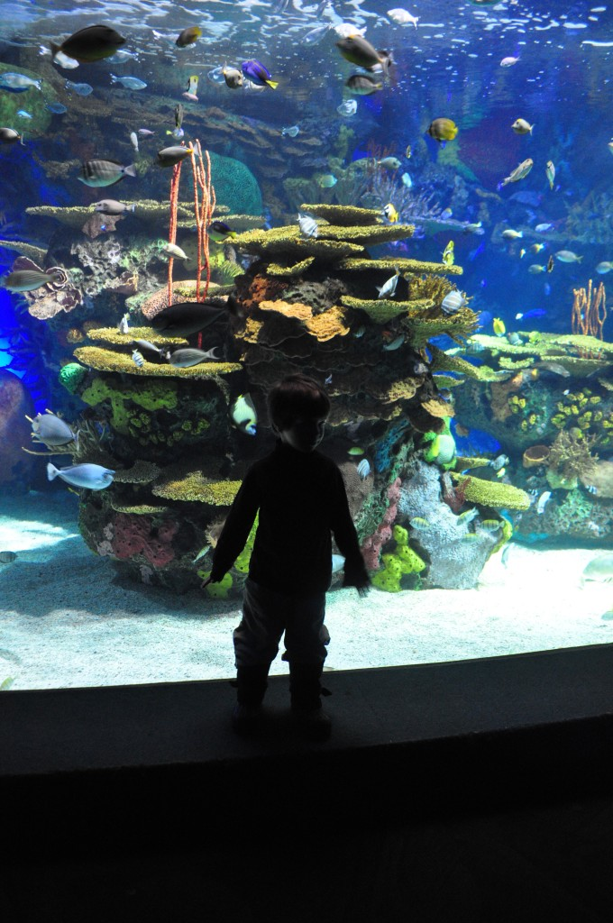 ripley's aquarium, under the sea